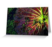 Cypress Swamp Lily Pad Greeting Card
