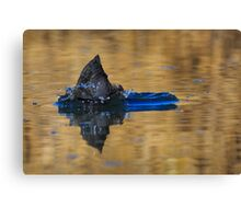 A coot what? Canvas Print