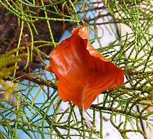 A Fallen Sycamore Leaf by kathrynsgallery
