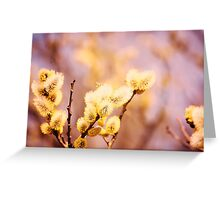 The willow with yellow spring catkins. Flying insects. Soft pastel background: yellow and beige Greeting Card