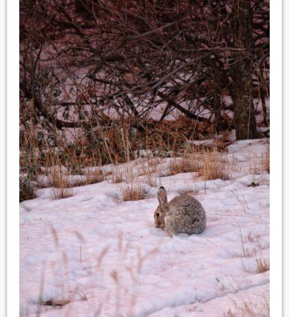 Garden of the Gods rabbit Sticker