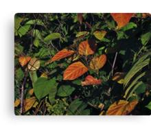 Chokeberry Potpourri Canvas Print