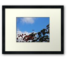 As the season flies by ('Leaf'ing below a jet plane) Framed Print