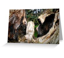 Laughing Trees/Fighting Bears Greeting Card