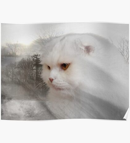 Soft and white like snow with a drop of golden sun Poster