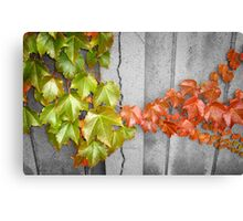 Splitting Season Canvas Print