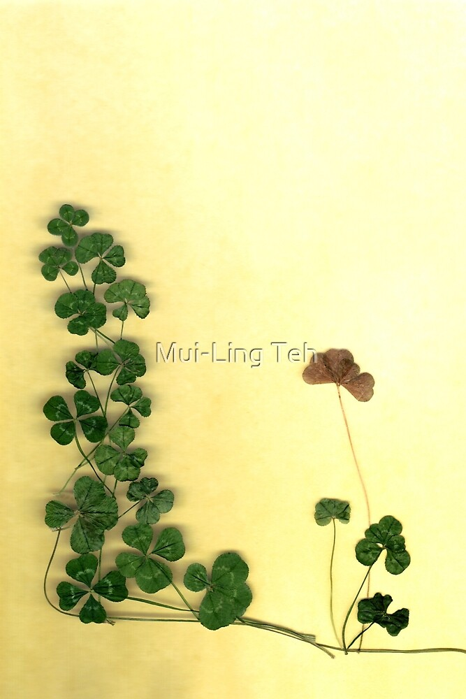 Golden Clover Dreams by Mui-Ling Teh