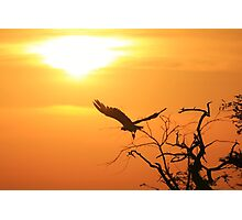 White-backed Vulture - Flying into the Sun. Photographic Print