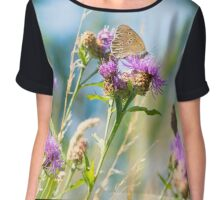Beautiful brown butterfly sitting on a flower. Colorful turquoise background Chiffon Top