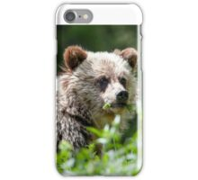 Grizzly Bear Cub  iPhone Case/Skin