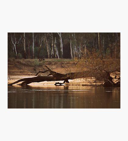 Fallen by Lorraine McCarthy Photographic Print