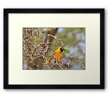 Golden Weaver - African Peace Symbol Framed Print