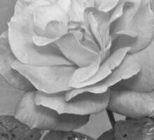 Winter Rose Sticker