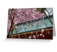 Weeping cherry blossoms, Heian Jingu Greeting Card