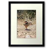 Chukar Partridge Framed Print