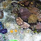 Colorful tropical sea creatures and rocks. California Institute of Science. by naturematters