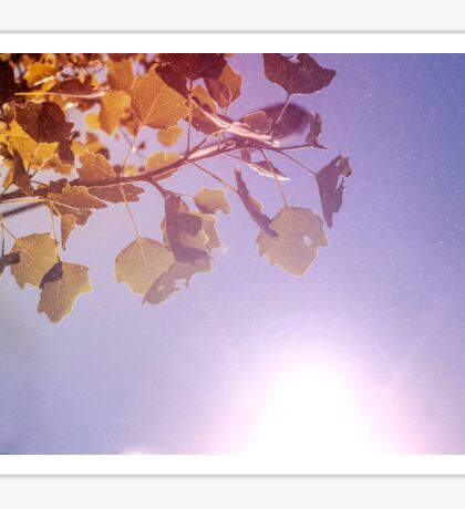 Leaves backgrund: yellow leaves of linden in the strong sun on the blue background Sticker