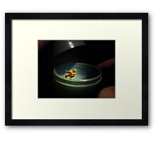 Surprise! Framed Print
