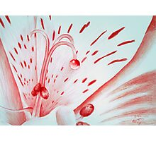 Drawing Day Red Bubble Nectar Photographic Print