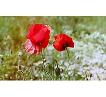 Flowers. Red poppies on a green background Photographic Print