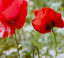 Flowers. Red poppies on a green background Sticker