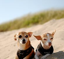 Sadie and Ritz in Nantucket by kristinlam
