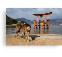 Deer, Miyajima Canvas Print