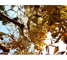 GAZING INTO THE AUTUMN TREES Photographic Print