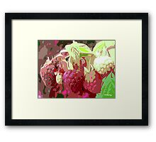 RASPBERRY HARVEST Framed Print