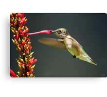Sweet Nectar!! Canvas Print