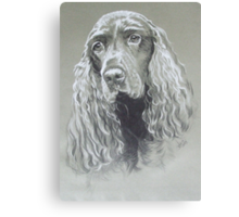 Field Spaniel Canvas Print