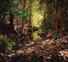 Bellbird Creek   Dungog Australia  by Daniel Watts