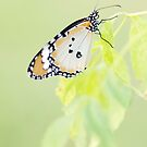 Mariposa by the-novice