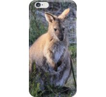 Female Bennett's Wallaby iPhone Case/Skin
