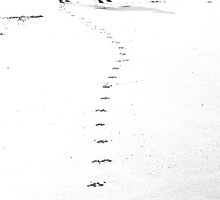 Pawprints - Run Free by Sally J Hunter