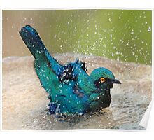 It is such fun taking a bath! Poster