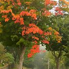 Maple Lane by WildThingPhotos