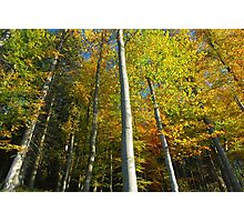 color trees Photographic Print