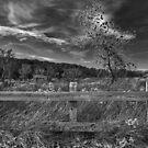 Autumn in Black & White by Victoria Jostes
