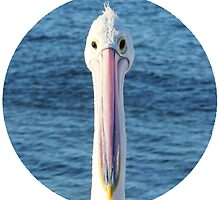 The Perky Pelican - Comical Animals by Serena Star Leonard