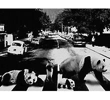 Panda Road Photographic Print