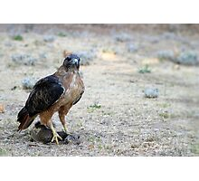 Red Tailed Hawk Catch Photographic Print