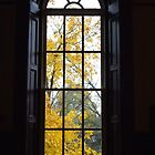 Window in a Court Room by goddarb