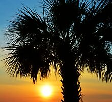 Palm Tree Sunrise Silhouette by Kathy Baccari
