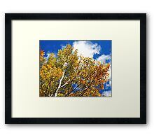 Blue Rocky Mountain Skies and Golden Aspen Trees in fall Framed Print