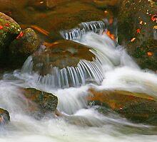 AUTUMN,MIDDLE PRONG LITTLE RIVER by Chuck Wickham