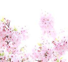 Cherry Blossom 1 by JennaSaunders