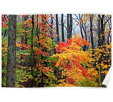 AUTUMN SPLENDOR (HORIZONTAL) Poster