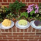 Rainbow cauliflowers by nealbarnett