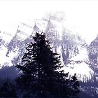 Canadian Rockies in Winter. by vette
